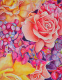 Big pink. Rose in hightly detailed watercolors Stock Photography