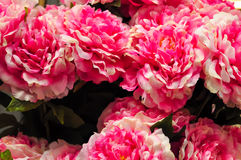 Big Pink Carnation Flower. Close Up In Flower Market Royalty Free Stock Photo