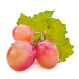 Big pink grape Stock Images