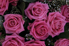 Big pink roses in a bridal bouquet Stock Image