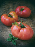 Big pink tomato and basil on a wooden background Royalty Free Stock Image