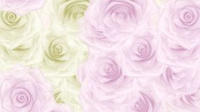 Big pink and white rose buds fall down, loop bg. Beautiful seamless loop 3D animation like intro for wedding, valentine`s day or memories video. On this 3d stock footage
