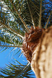 Big plant palm tree beautiful photo. Concept of holiday and summer Royalty Free Stock Image