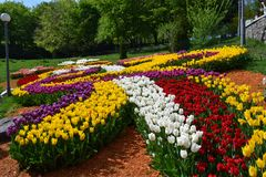 Big plantation of red tulips on sunny day in spring. Manufacture of growing flowers. Flower bed in the form of a petals stock photo