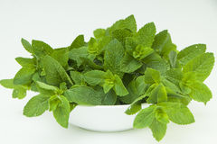 Big plate of fresh mint leaves on white Stock Photography