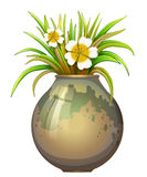 A big pot container with a flowering plant Stock Images