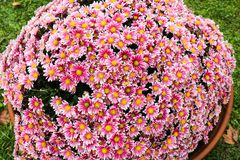 Big pot full of colorful flowers Stock Photo