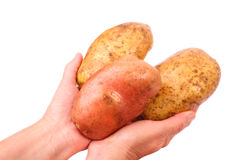 Big potatoes. In hand on a white background Stock Image