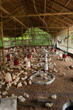BIG POULTRY REARING FARM Stock Photography