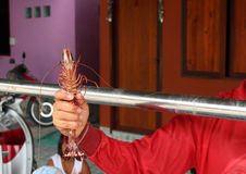 Big prawn in hand Royalty Free Stock Photography