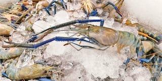 Big prawn with ice in the market. Fresh big prawn with ice in the market Royalty Free Stock Photos