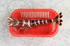 Big prawn Royalty Free Stock Image