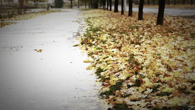 Big puddle on autumnal alley with yellow foliage and cold Rain stock video footage