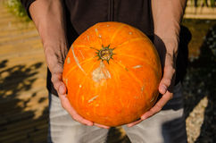 The big pumkin Royalty Free Stock Image