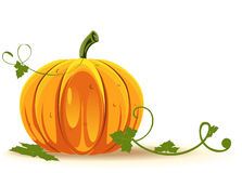 Big pumpkin Stock Photography