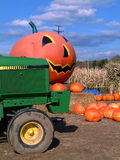 Big pumpkin. Giant pumpkin in cornfield with tractor in forground Stock Photos