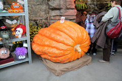 Big pumpkin! stock photography