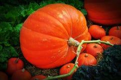 The big Pumpkin Stock Photos