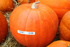 Big Pumpkin Royalty Free Stock Photos