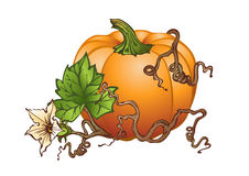 Big pumpkin stock images