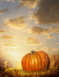 Big pumpkin on autumn lawn over sunset sky background Royalty Free Stock Images