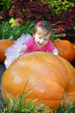 Big Pumpkin and Baby stock photography
