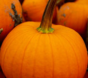 Big Pumpkin Close-up Stock Photography