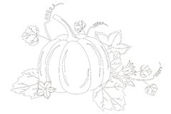 Free Big Pumpkin Coloring Book Page With Flowers Stock Photo - 187245520