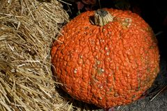 Big Pumpkin Royalty Free Stock Photography