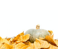 Big pumpkin and dry leafs Royalty Free Stock Photo