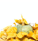 Big pumpkin and dry leafs Royalty Free Stock Images