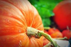 The big Pumpkin on garden Stock Photography