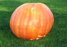 Big pumpkin on grass. Picture of a big orange pumpkin on grass Stock Photos
