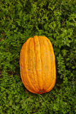 Big pumpkin in the grass Royalty Free Stock Photo