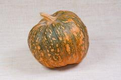The big pumpkin from kitchen garden. The big tasty pumpkin from kitchen garden Stock Photography