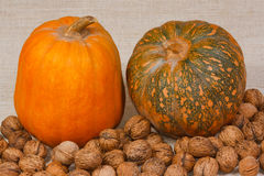 The big pumpkin and nuts. From kitchen garden Stock Photography