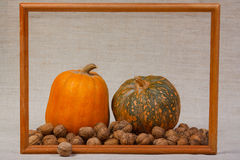 The big pumpkin and nuts in frame. The big pumpkin and nuts from kitchen garden in frame Royalty Free Stock Image