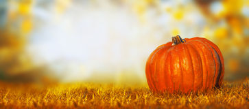 Free Big Pumpkin On Lawn Over Autumn Nature Background, Banner Royalty Free Stock Photos - 56531188
