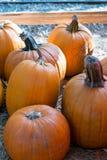 Big Pumpkin Stock Photos