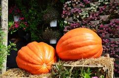 Big pumpkin Royalty Free Stock Photo