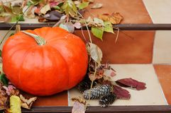 Big pumpkin on the stairs Stock Image