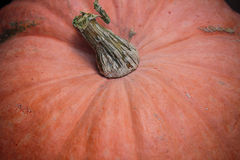 Big pumpkin Stock Photos