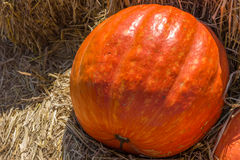 Big pumpkin. On the straw in the farm Royalty Free Stock Images