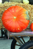 Big pumpkin on trolley Stock Photography