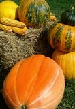 Big pumpkin view Royalty Free Stock Photo
