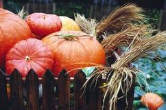Big pumpkins. It is big pumpkins for showing Royalty Free Stock Images
