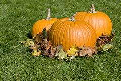 Big Pumpkins and Autumn Leaves Stock Photos