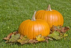Big Pumpkins and Autumn Leaves Royalty Free Stock Photo