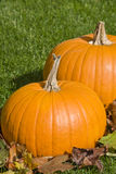 Big Pumpkins and Autumn Leaves Royalty Free Stock Image