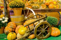 Big pumpkins in the cart stock images
